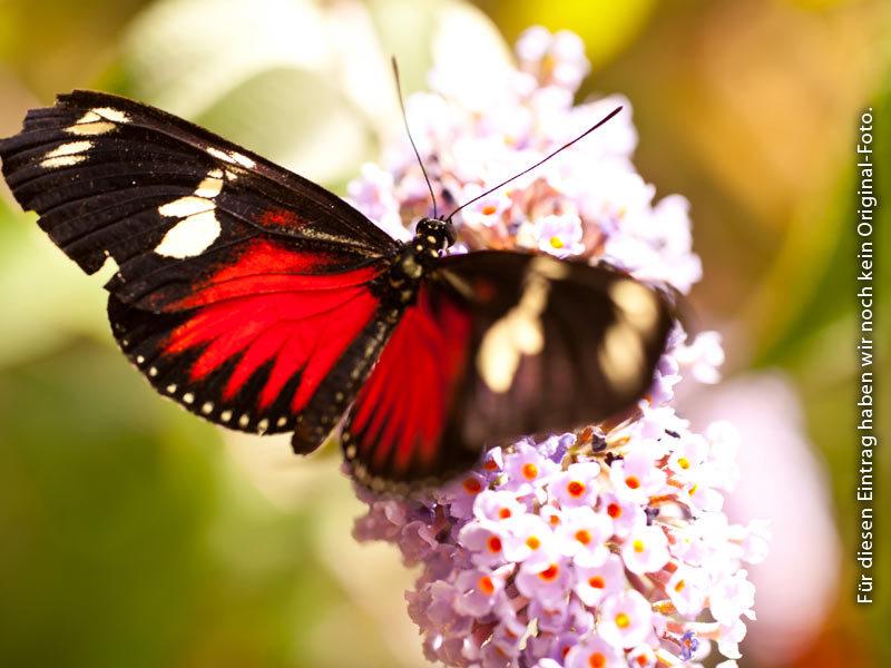 Schmetterlingspark Sassnitz