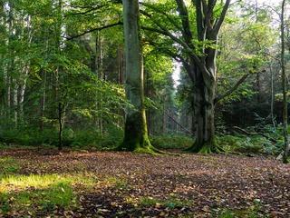 Naturschutzgebiet Ahrenshooper Holz