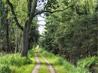 Terrainkurweg: Waldweg