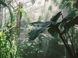 Botanischer Garten und Arboretum der Universität Greifswald