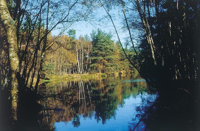 Naturschutzgebiet Ribnitzer Großes Moor