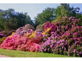 Rhododendronparkfest Graal-Müritz