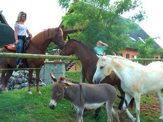 Freizeit auf dem Pferderücken