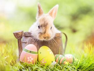 Arrangements zu Feiertagen (von Ostern bis Silvester)