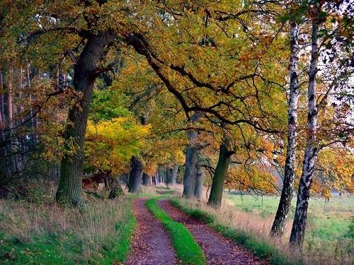 Auszeit - Die Ruhe des Waldes genießen
