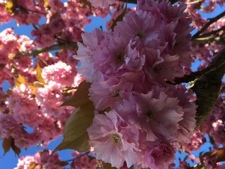 Frühjahrserwachen im Nationalpark