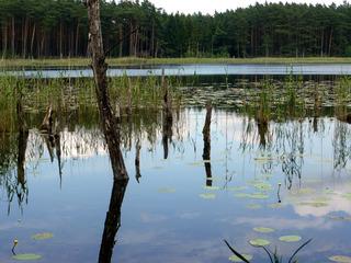 Müritz-Nationalpark erleben