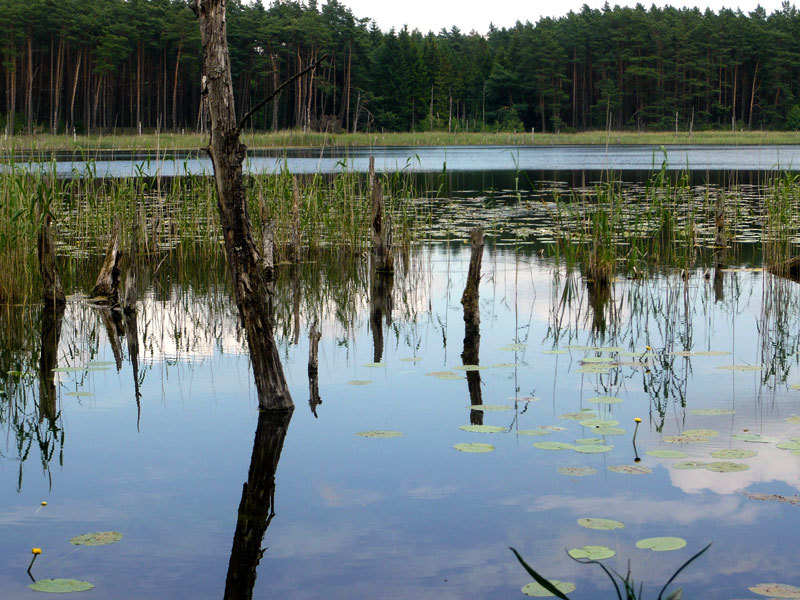 Einfach mal Natur pur am Müritz-Nationalpark