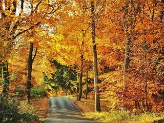 Herbstliche Verwöhntage