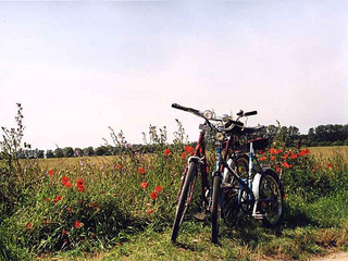 Arrangement - Fahrrad inklusive