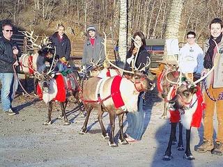 Weihnachtswanderung mit Rentieren