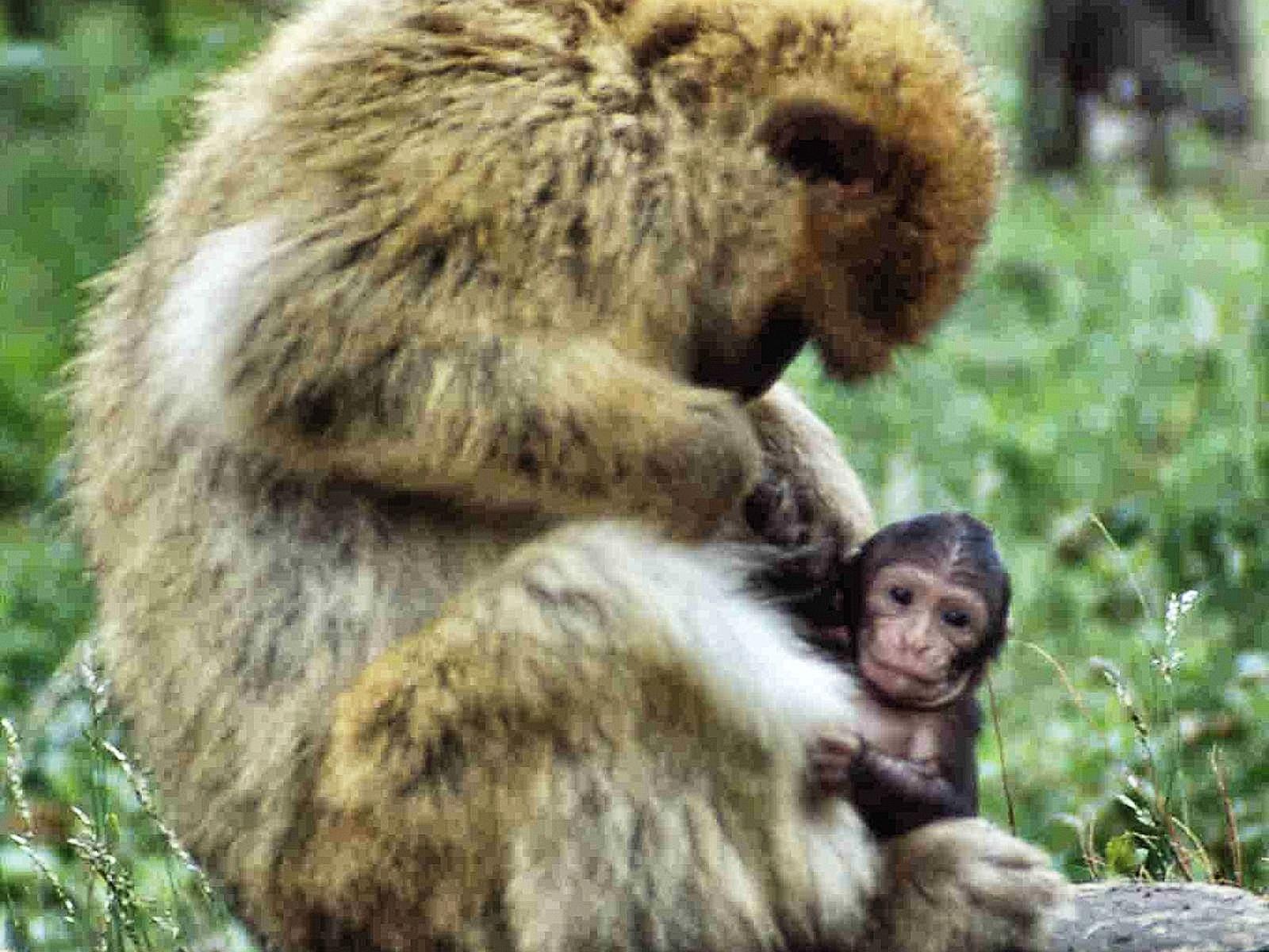 Sommerrodelbahn und Affenwald