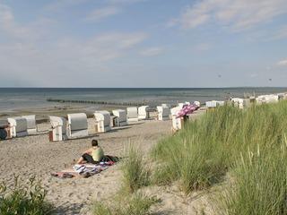 Strand Schwarzer Busch