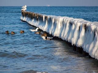 Arrangement Winter & Meer