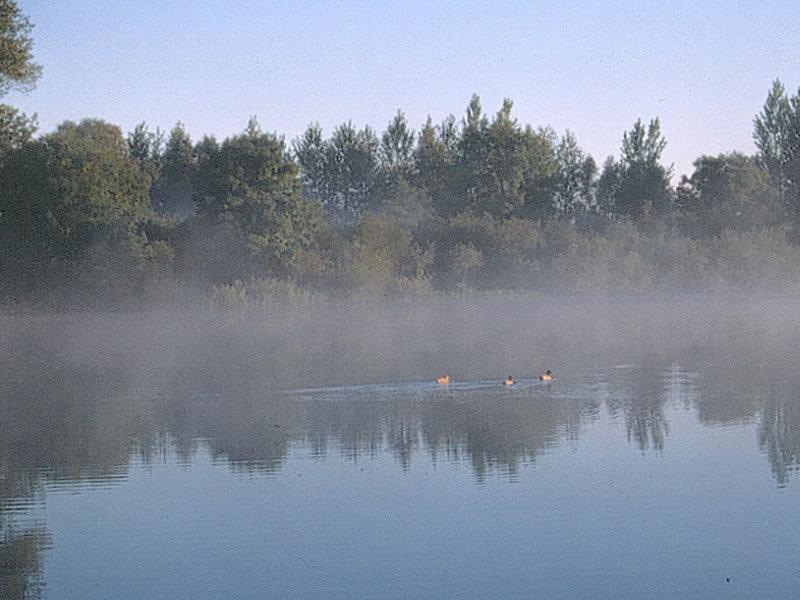 Naturschutzgebiet Binsenbrink im Teterower See
