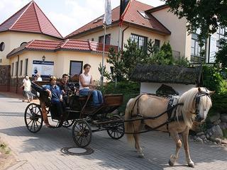 Angebote für Pferdefreunde vom Landhotel Borstel-Treff