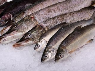 Rostocker Fischmarkt